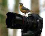 medium_Oiseaux_Canon.jpg